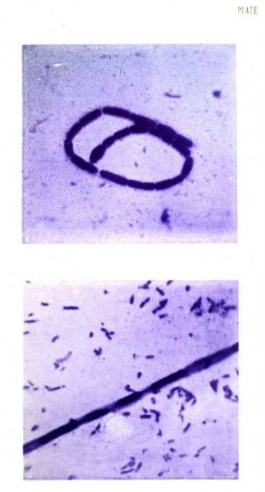 Photography of Bacteria 6
