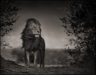 african-wildlife-nick-brandt-05